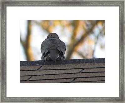 Over The Shoulder Framed Print by Rickey Rivers Jr