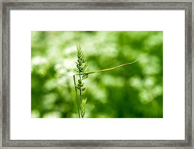 Over There - Featured 3 Framed Print