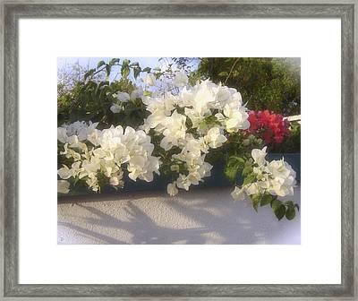 Overdene Gardens Framed Print by Debi Dmytryshyn