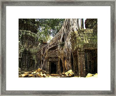 Overgrown Jungle Temple Tree  Framed Print