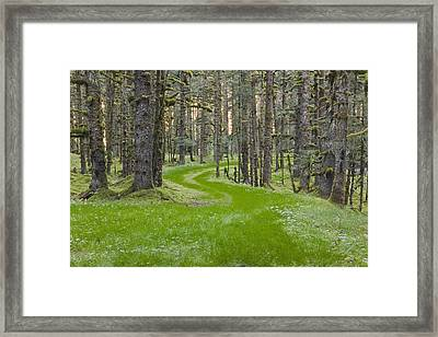 Overgrown Old Road Through Spruce Framed Print by Kevin Smith