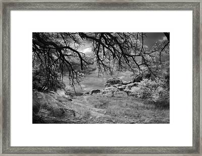Overhanging Branches Framed Print