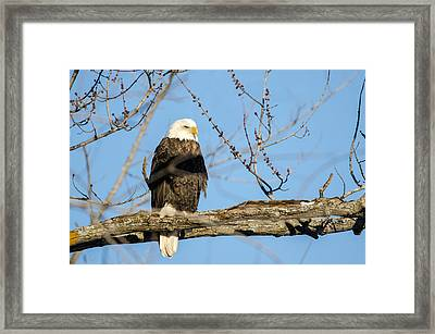 Framed Print featuring the photograph Overlooking Freedom by Steven Santamour
