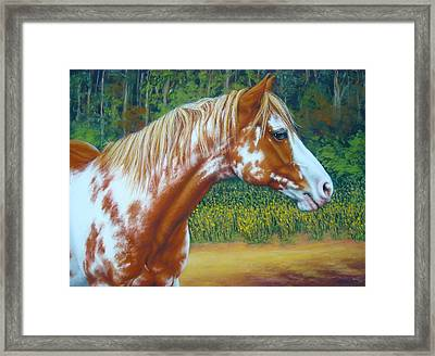 Overo Paint Horse-colorful Warrior Framed Print