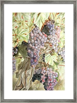 Overripe Framed Print by Mary susan Hauler