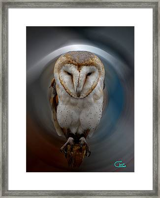 Owl Alba  Spain  Framed Print
