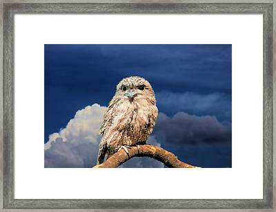 Owl At Dusk Framed Print