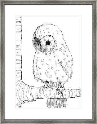Owl Baby Framed Print