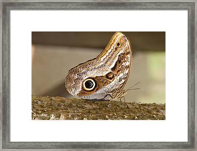 Owl Butterfly, Butterfly Aviary, Agua Framed Print by Howie Garber