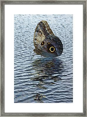 Owl Butterfly On Water Framed Print by Jane McIlroy