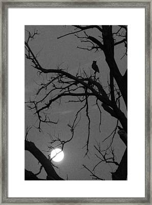 Owl By Night Framed Print