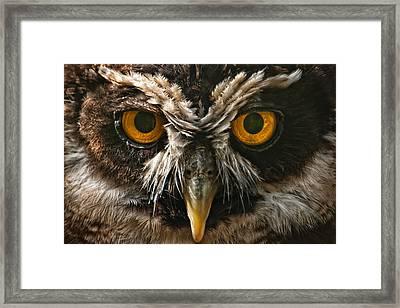 Owl Framed Print by Chris Boulton