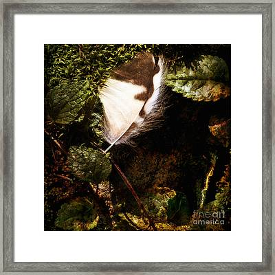 Owl Feather On Natures Canvas In Square Framed Print by Lee Craig