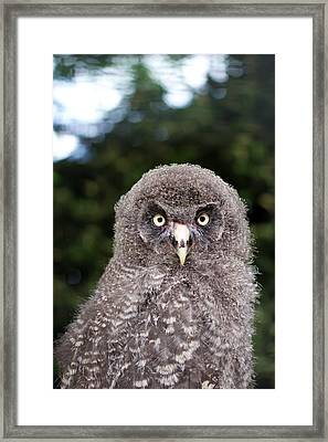 owl Framed Print by Fizzy Image