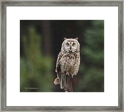 Framed Print featuring the photograph Owl In The Forest Visits by Tom Janca