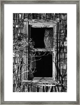 Owl In The Window Framed Print