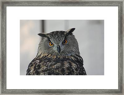 Owl Framed Print by Jeff Wright