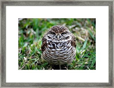 Framed Print featuring the photograph Owl. Best Photo by Oksana Semenchenko