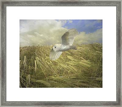 Framed Print featuring the photograph Owl On The Prowl by Roy  McPeak