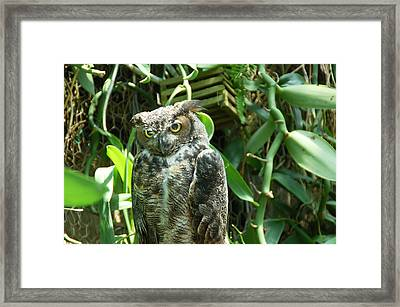 Owl Portrait 3 Framed Print by Aimee L Maher Photography and Art Visit ALMGallerydotcom