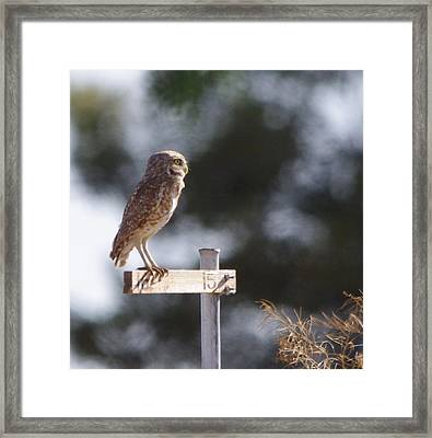 Framed Print featuring the photograph Owl Profile by David Rizzo
