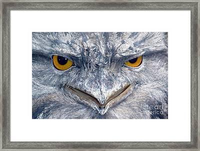 Owl Framed Print by Sandro Rossi