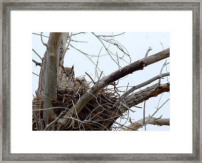 Owl Snuggle  Framed Print by Rebecca Adams
