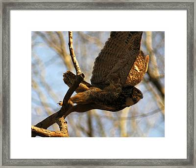 Owl Take Off Framed Print by Raymond Salani III