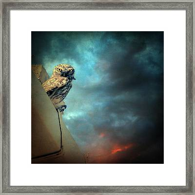 Owl Framed Print by Taylan Apukovska