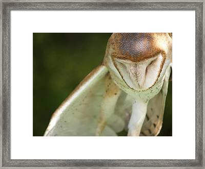 Owl  Framed Print by Tiffany Swanson