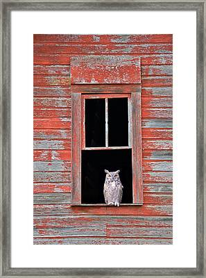 Owl Window Framed Print by Leland D Howard