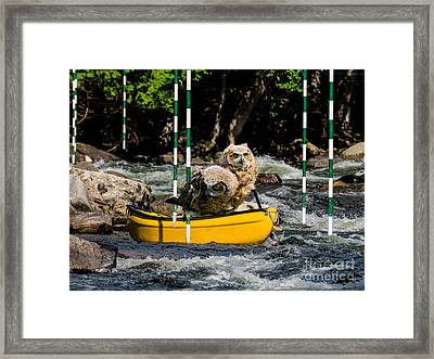 Owlets In A Canoe Framed Print