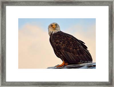 Owlish I Framed Print