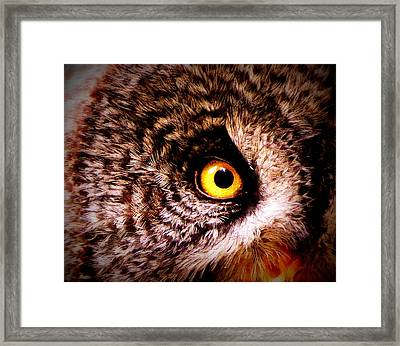 Owl's Eye Framed Print