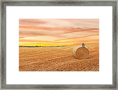 Owl's Harvest Supper Framed Print by Gill Billington