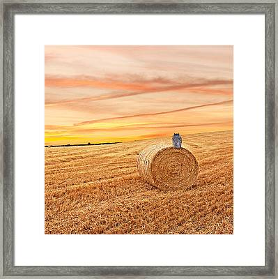 Owl's Harvest Supper - Square Framed Print by Gill Billington