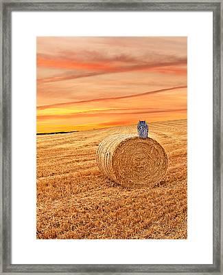 Owl's Harvest Supper Vertical Framed Print by Gill Billington