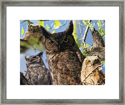 Owls Of Lac Lawrann Framed Print by Matt Steffen