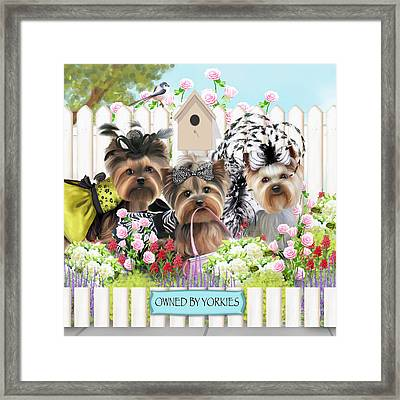 Owned By Yorkies II Framed Print by Catia Cho