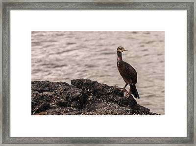 Framed Print featuring the photograph Owner Of The Island Lunga by Sergey Simanovsky