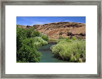 Owyhee River Great Brown Trout Framed Print