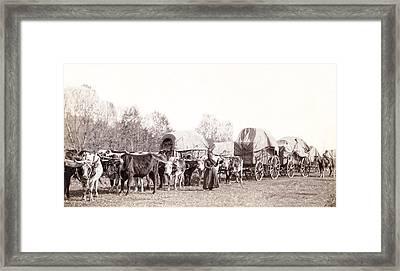 Ox-driven Wagon Freight Train C. 1887 Framed Print by Daniel Hagerman