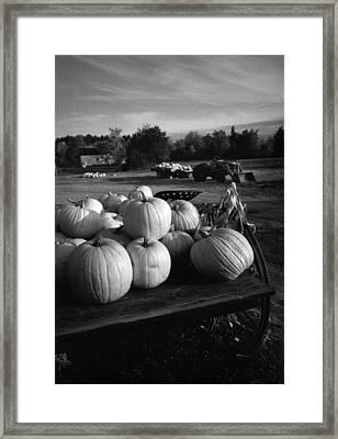 Oxford Pumpkins Bw Framed Print by Cindy McIntyre