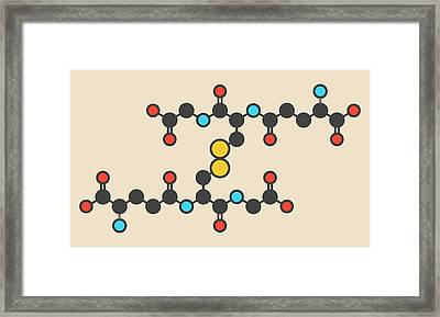 Oxidized Glutathione Molecule Framed Print by Molekuul