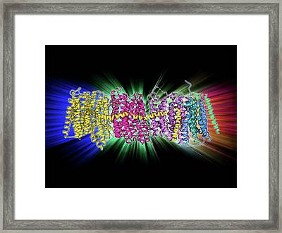 Oxidoreductase Enzyme Complex Framed Print