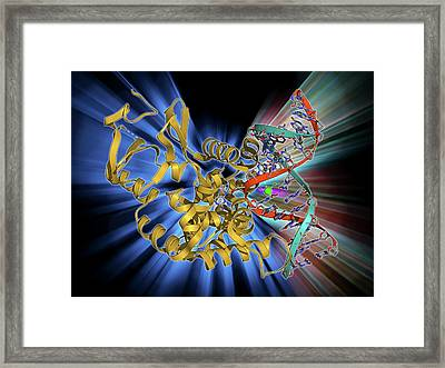 Oxoguanine Glycosylase Complex Framed Print by Laguna Design