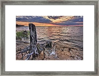 Oyster Bay Stump Sunset Framed Print
