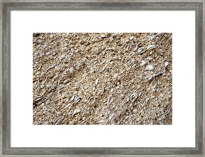 Oyster Beds In Cliff Framed Print by Jon Wilson