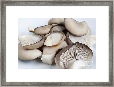 Oyster Cap Mushroom Framed Print