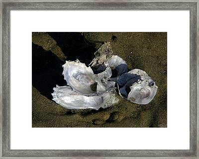 Oyster Collage Framed Print by Michael Friedman